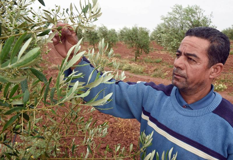 Morocco works on 'digital transformation' of agriculture